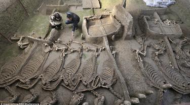 Dua orang peneliti menemukan sebuah lubang penguburan kuda di Luoyang, Cina yang berisi beberapa kerangka kuda yang utuh dan kereta. Makam yang berumur 2.500 tahun ini sudah digali sejak tahun 2009. (Dailymail)