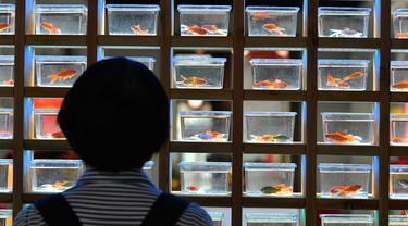 FOTO: 100 Spesies Ikan Mas Hias Dipamerkan di Sanfangqixiang