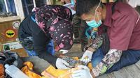 Tim dari Pusat Suaka Satwa Elang Jawa (PSSEJ) Halimun Salak merawat Elang Alap Jambul yang ditemukan warga saat bencana banjir melanda Kabupaten Bogor. (Liputan6.com/Achmad Sudarno)