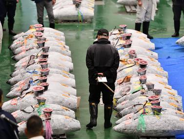 Lelang Tuna di Pasar Ikan Toyosu