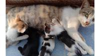 Induk kucing dan anak-anaknya./Copyright S