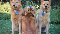 Pose unik anjing-anjing ini curi perhatian warganet. Sumber: Instagram/kayatheshepherd.