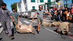 Shepherd Romain Jaurigueberry (kiri) membawa domba yang mati oleh serangan beruang ke sub-prefektur Bayonne, Prancis, Senin (2/9/2019). Petani memprotes meningkatnya serangan beruang terhadap kawanan domba di pegunungan Pyrenees. (AP Photo Bob Edme)