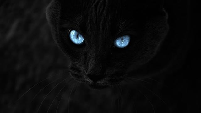 Unduh 100+  Gambar Kucing Lucu Warna Hitam Paling Keren