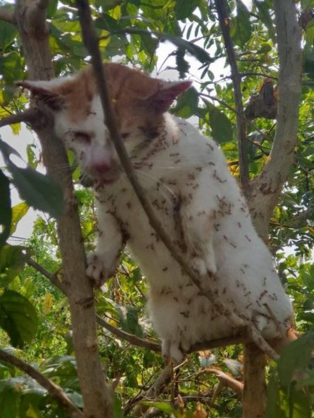 Kasihan, Kucing Ini Dikerumuni Semut Merah Usai Panjat Pohon Hindari Anjing