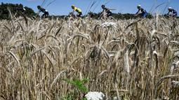 Para pebalap beraksi di Etape 14 Tour de France berjarak 208,5 km antara Montelimar dan Villars-les-Dombes Parc des Oiseaux, Prancis, (16/7/2016). (AFP/Jeff Pachoud)