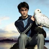 Penampilan Daniel Radcliffe di film Harry Potter. Foto: via irishexaminer.com