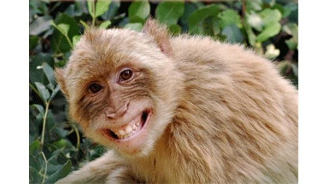 Ulah iseng si monyet pun tak luput dari rekaman para wisatawan yang tengah berkunjung ke Provinsi Henan, Tiongkok.