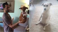 Kelakuan unik anjing (Sumber: Reddit/purellmysoul/withnailsandeyes)