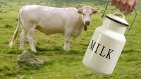 Adakah Konsekuensi yang Berbahaya dari Alergi Susu Sapi?