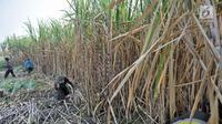 Aktivitas petani tebu di Desa Betet, Pesantren, Kediri, Jatim pada akhir September lalu. Pada tahun 2018, stok gula konsumsi surplus 2,4 juta ton dengan rincian stok sisa akhir tahun 2017 sebesar 1 juta ton. (Merdeka.com/Iqbal S. Nugroho)