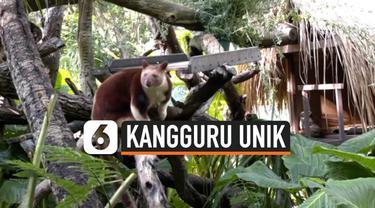 vertical kangguru