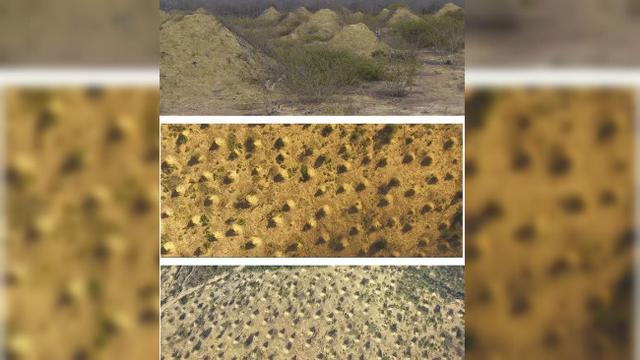 4. Sarang koloni semut prasejarah (kredit Google Earth)