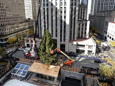 Pekerja menggunakan alat berat untuk menempatkan pohon Natal raksasa di Rockefeller Center, kota New York, Sabtu (10/11). Meskipun Natal masih sebulan lagi, pohon Natal terbesar di New York City sudah dipasang.  (Diane Bondareff/AP for Tishman Speyer)