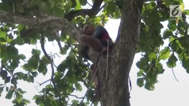Seorang pria tiba-tiba pingsan saat berada di atas pohon hingga kemudian masyarakat mengevakuasi korban.