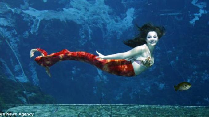 53+ Foto Penampakan Putri Duyung Di Laut Gratis Terbaru