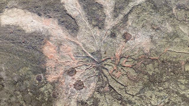 Hutan Tertua Dunia ini baru Terkuak Selama 385 Juta Tahun