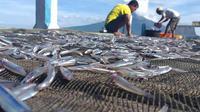 Foto: Produk Ikan Teri yang merupakan BUMDES 7 Maret Hadakewa, Kabupaten Lembata, NTT (Liputan6.com/Dion)