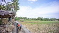 Kementerian Pertanian (Kementan) memberikan puluhan unit alat mesin pertanian (Alsintan) kepada kelompok tani di Kabupaten Gunung Kidul, Daerah Istimewa Yogyakarta (DIY). Bantuan ini dalam rangka meningkatkan hasil produktivitas pertanian.
