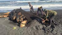 Seekor ikan paus terdampar di Pantai Lumajang (Foto:Liputan6.com/Dian Kurniawan)