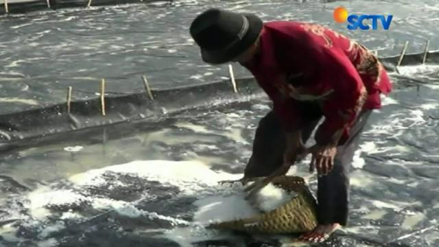 Meskipun masih ada kios ikan asin yang buka, dagangannya pun kini mulai sepi pembeli lantaran hargannya naik hingga empat kali lipat.