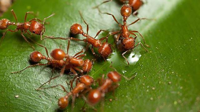 Ilustrasi semut