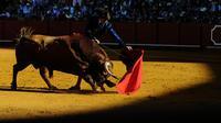 Matador Perancis, Sebastian Castella saat adu banteng di Maestranza, Sevilla pada 14 April 2016. ( AFP PHOTO / CRISTINA QUICLER)