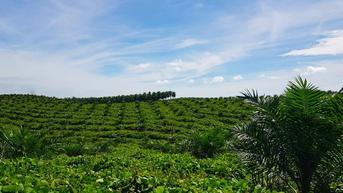PTPN V Disebut Ambil Alih Ribuan Hektare Lahan Petani Sawit, Benarkah?