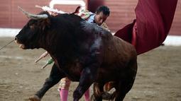 Seorang matador, Ivan Fandino menunjukkan keterampilannya dalam adu banteng di sebuah arena di Prancis barat daya, Sabtu (17/6). Matador berusia 36 tahun itu mengalami luka parah setelah tanduk lawannya menembus paru-parunya. (IROZ GAIZKA/AFP)