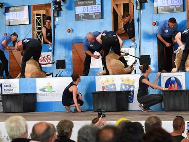 Sejumlah peserta berusaha memotong bulu domba dalam kategori mesin dalam acara World Sheep Shearing and Woolhandling Championships di Le Dorat, Prancis (5/7/2019). Kompetisi ini berlangsung untuk pertama kalinya di Prancis dan berlangsung dari 4-7 Juli 2019. (AFP Photo/Mehdi Fedouach)