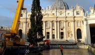 Pekerja menggunakan alat berat untuk mendirikan pohon Natal raksasa di Lapangan Santo Petrus, Vatikan, Kamis (22/11). Pohon cemara yang didatangkan dari Hutan Consiglio di Italia ini tingginya mencapai 23 meter. (AP/Andrew Medichini)