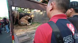 Panitia Idul Adha Artha Graha Peduli (AGP) melakukan pelepasan hewan kurban di SCBD, Jakarta, Sabtu (10/8/2019). Pendistribusian ratusan hewan kurban dilakukan ke seluruh unit usaha AGP dan Artha Graha Network (AGN) di 76 titik Jabodetabek dan 152 titik di luar Jabodetabek. (Liputan6.com/HO/Rizky)
