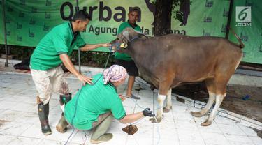 Petugas bersiap menyembelih sapi yang dikurbankan pada Idul Adha 1440 H di halaman Masjid Sunda Kelapa, Jakarta, Minggu (11/8/2019). Setiap tahun, Masjid Sunda Kelapa rutin melakukan penyembelihan hewan kurban yang berasal dari masyarakat. (Liputan6.com/Immanuel Antonius)