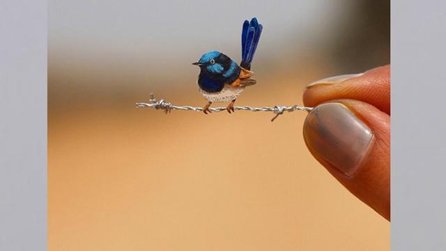 9 Cara Ternak Lovebird Di Rumah Bagi Para Pemula Lifestyle Liputan6 Com