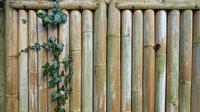Ilustrasi bambu. (dok. Pixabay.com/MabelAmber )