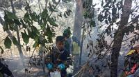 Kebakaran di Gunung Bawakaraeng. (Liputan6.com/Ahmad Yusran)
