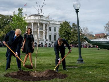 Melania Trump melihat Presiden Donald Trump dan Presiden Prancis Emmanuel Macron saat menggunakan sekop dalam upacara penanaman pohon di South Lawn Gedung Putih, Washington (23/4). (AP Photo / Andrew Harnik)