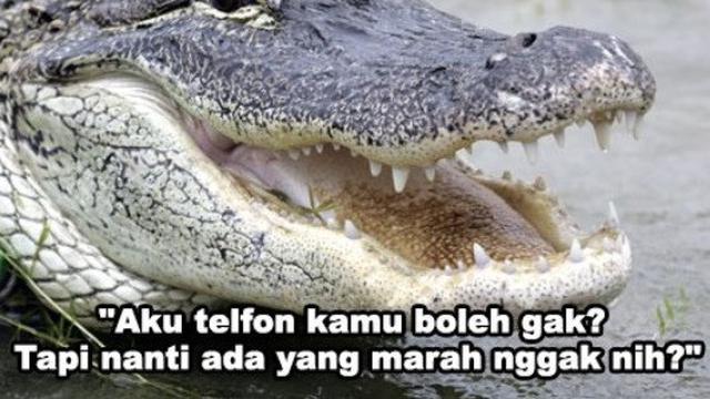 7 Meme Rayuan Gombal Buaya Darat Bikin Senyum Kecut Citizen6 Liputan6 Com