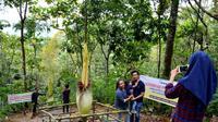 Bunga Kibut raksasa atau Amorphopalus Titanum menjadi daya tarik wisatawan memanfaatkan libur tahun baru 2017 (Liputan6.com/Yuliardi Hardjo)