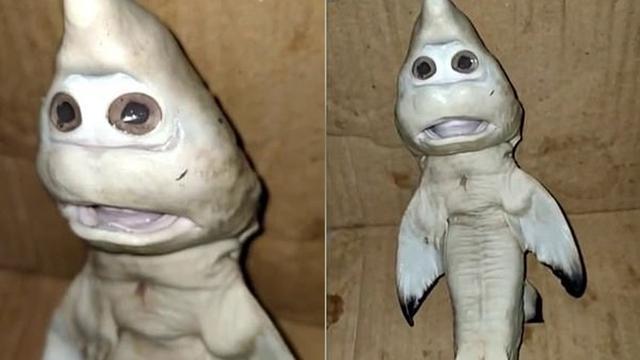 Viral Bayi Hiu Berwajah Manusia Ditemukan Nelayan di NTT, Ini 4 Faktanya