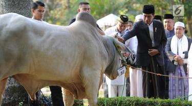 Presiden Joko Widodo atau Jokowi menyerahkan sapi braman 1,4 ton kepada DKM Baitul Faizin usai salat Idul Adha 1439 Hijriah di Lapangan Tegar Beriman, Cibinong, Kabupaten Bogor, Jawa Barat, Rabu (22/08). (Merdeka.com/Arie Basuki)
