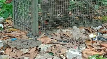 Monyet liar yang meresahkan warga di Desa Kalong Sawah, Kecamatan Jasinga, Kabupaten Bogor, akhrinya tertangkap.