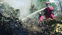 Proses pemadaman kebakaran lahan oleh petugas agar tidak terjadi bencana kabut asap. (Liputan6.com/M Syukur)