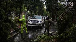 Petugas Dinas Kebersihan dan Pertamanan memotong pohon yang tumbang akibat hujan deras di kawasan jalan Sutan Syahrir, Jakarta, Kamis (22/11). Tumbangnya pohon tersebut disebabkan hujan deras yang melanda Jakarta siang tadi. (Liputan6.com/Faizal Fanani)