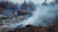 Bekas kebakaran lahan gambut di Riau yang masih mengepulkan asap dan berpotensi menyala jika ditiup angin kencang. (Liputan6.com/M Syukur)