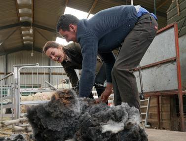 Kunjungi Peternakan, Kate Middleton dan Pangeran William Cukur Bulu Domba