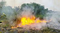 Karhutla Riau sebagai pemicu kabut asap diprediksi lebih parah tahun depan karena musim kemarau panjang. (Liputan6.com/M Syukur)