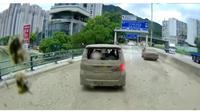Mobil Toyota Alphard terguyur semen