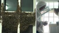 Ribuan lebah penuhi jendela apartemen. (Photo from Mothership reader)
