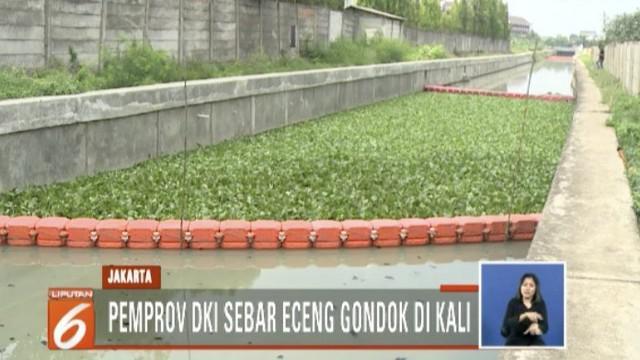 Apabila berhasil, nantinya metode eceng gondok akan diterapkan di kali-kali Ibu Kota. Gubernur akan memantau program ini.